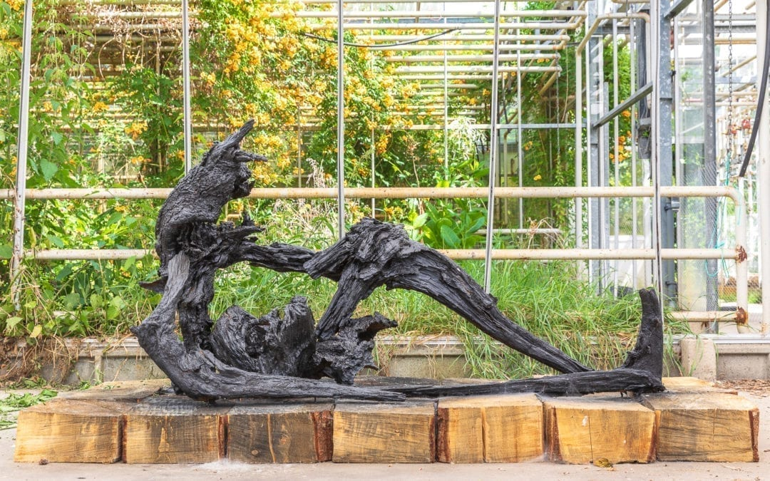 Into Nature 2020: Internationale kunst in het Bargerveen