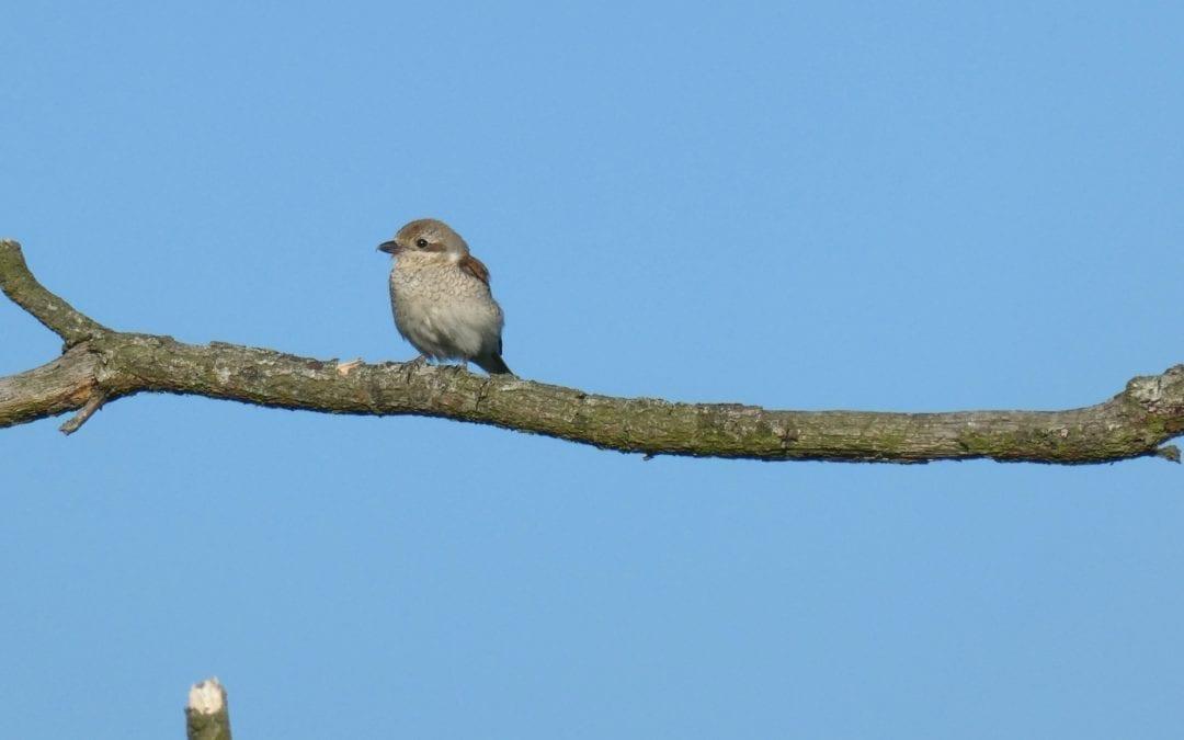 Vogels komen terug naar het Bargerveen